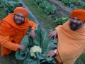 monks with cabbage
